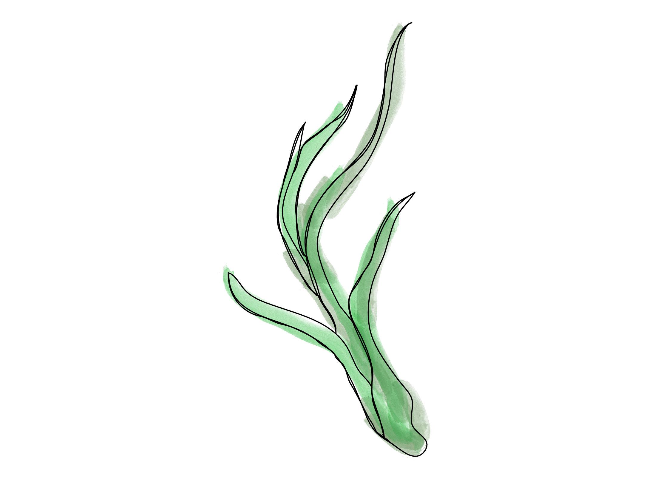Zielonolistni